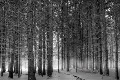 salimbeni_trees001