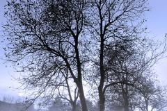 salimbeni_trees004
