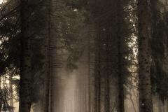 salimbeni_trees005