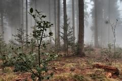 salimbeni_trees006