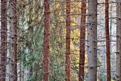 salimbeni_trees007