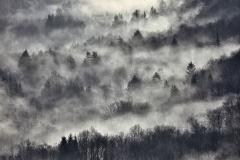 salimbeni_trees009