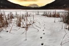 Titolo: La volpe e la neve - Pralugano - Valganna (VA)
