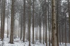 Titolo: Prima neve - Montegrino (VA)