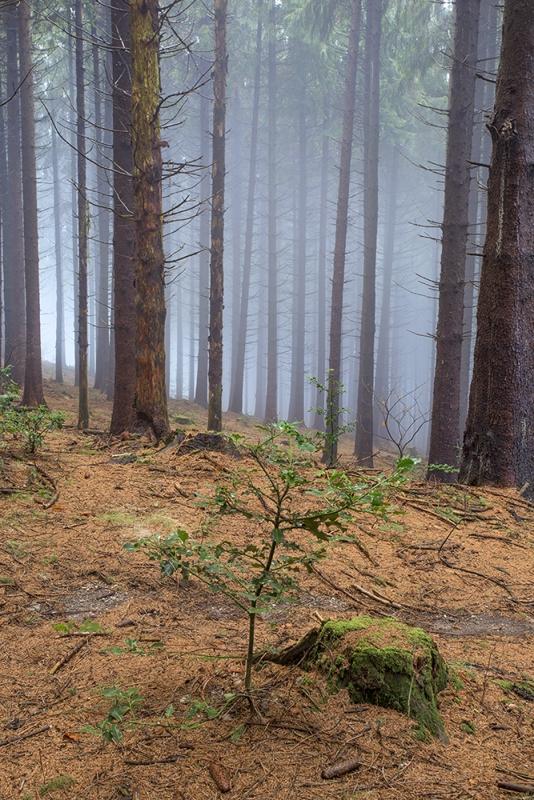 """""""Alberi nella nebbia"""""""