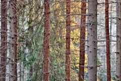 """Riflessi nel bosco"""